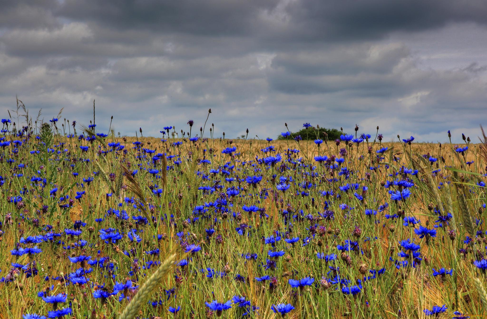 Фото полевых цветов в хорошем качестве зефир